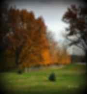 Fall4.jpg