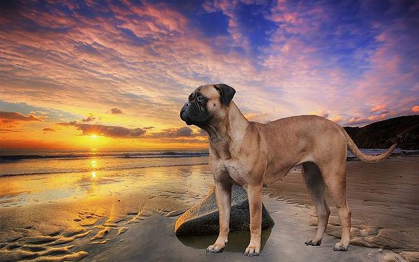 Beach-sunset-sun-sea-cloudy-sky-stone_19