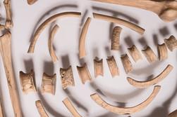 Loquat Fossil (detail)