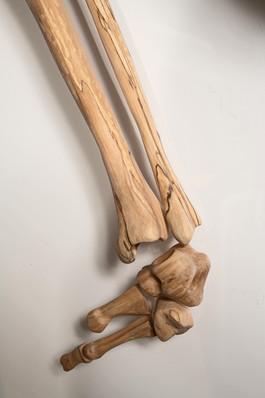 Loquat Fossil (detail - foot)