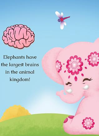 Elephant Brain_edited.png