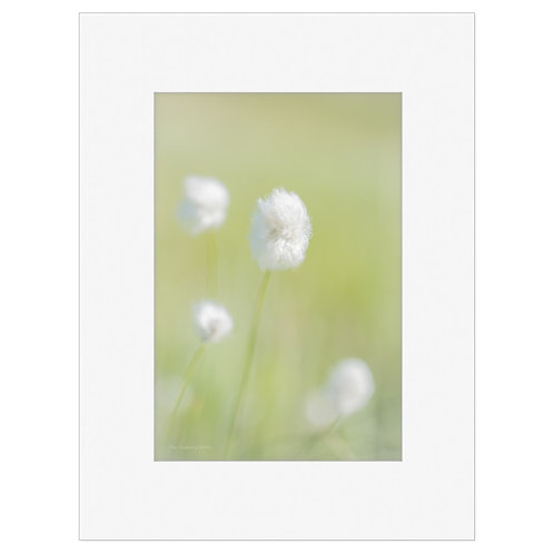 "Photo Art Print ""Arctic Flora no. 5"" - multiple sizes available"