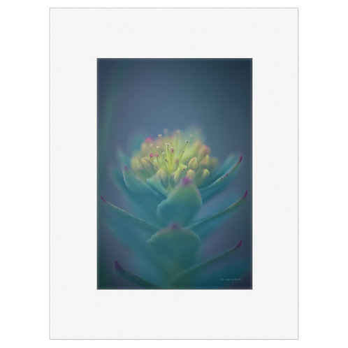 "Photo Art Print ""Arctic Flora no. 7"" - multiple sizes available"