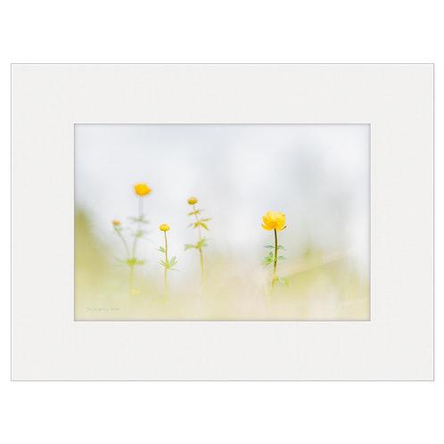 "Photo Art Print ""Arctic Flora no. 10"" - multiple sizes available"