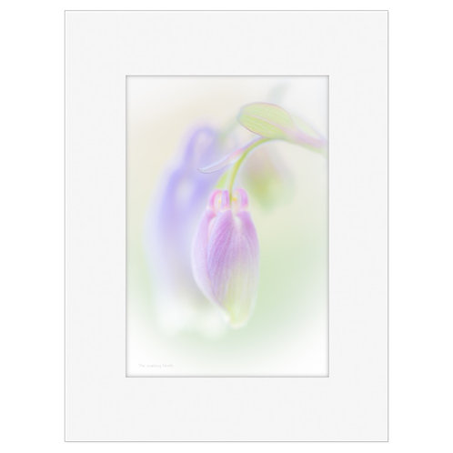 "Photo Art Print ""Arctic Flora no. 1"" - multiple sizes available"