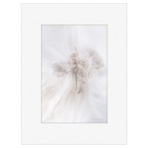 "Photo Art Print ""Arctic Flora no. 3"" - multiple sizes available"