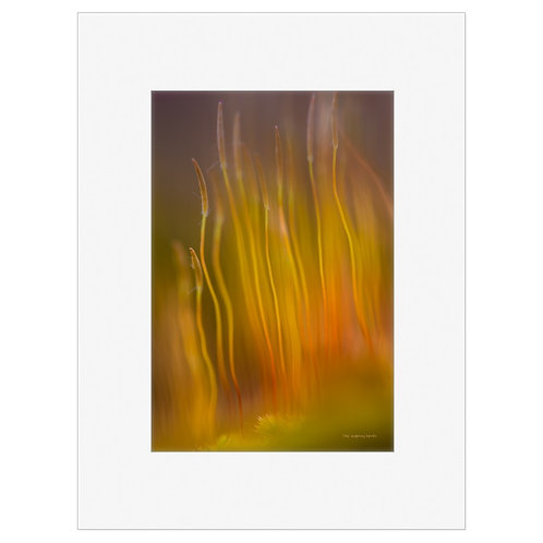 """Photo Art Print """"On Fire no. 1"""" - multiple sizes available"""