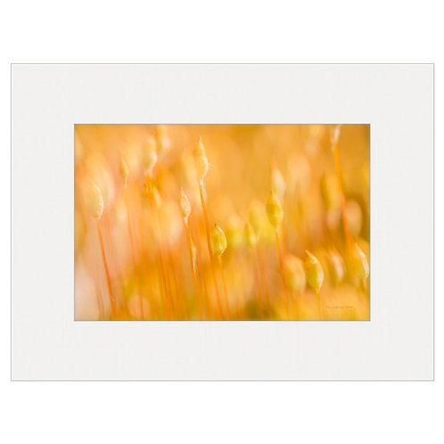 "Photo Art Print ""Orange Delight"" - multiple sizes available"