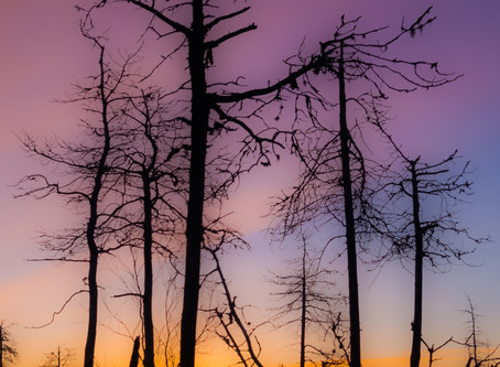 Transitory, Finnish forestry & art photography
