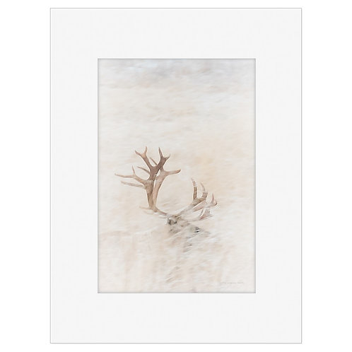 "Photo Art Print ""Poro no. 5"" - multiple sizes available"