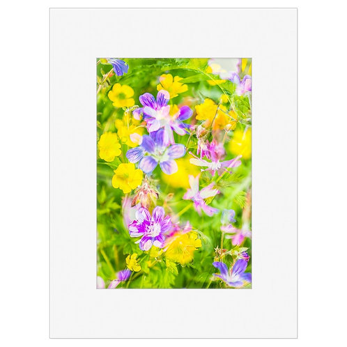 "Photo Art Print ""Arctic Flora no. 2"" - multiple sizes available"