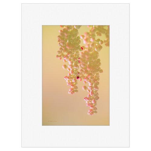 "Photo Art Print ""Arctic Flora no. 6"" - multiple sizes available"