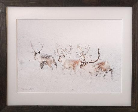 """""""running Rudolph"""" Framed Wall Art 40x50"""