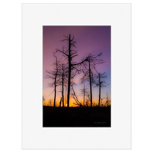 """Photo Art Print """"Transience"""" - multiple sizes available"""