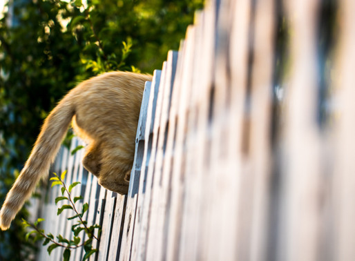 Don't Fence Me In – And Don't Fence Me Out