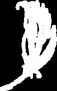 Logo%20Eventos%20de%20Autor%20(3)_edited