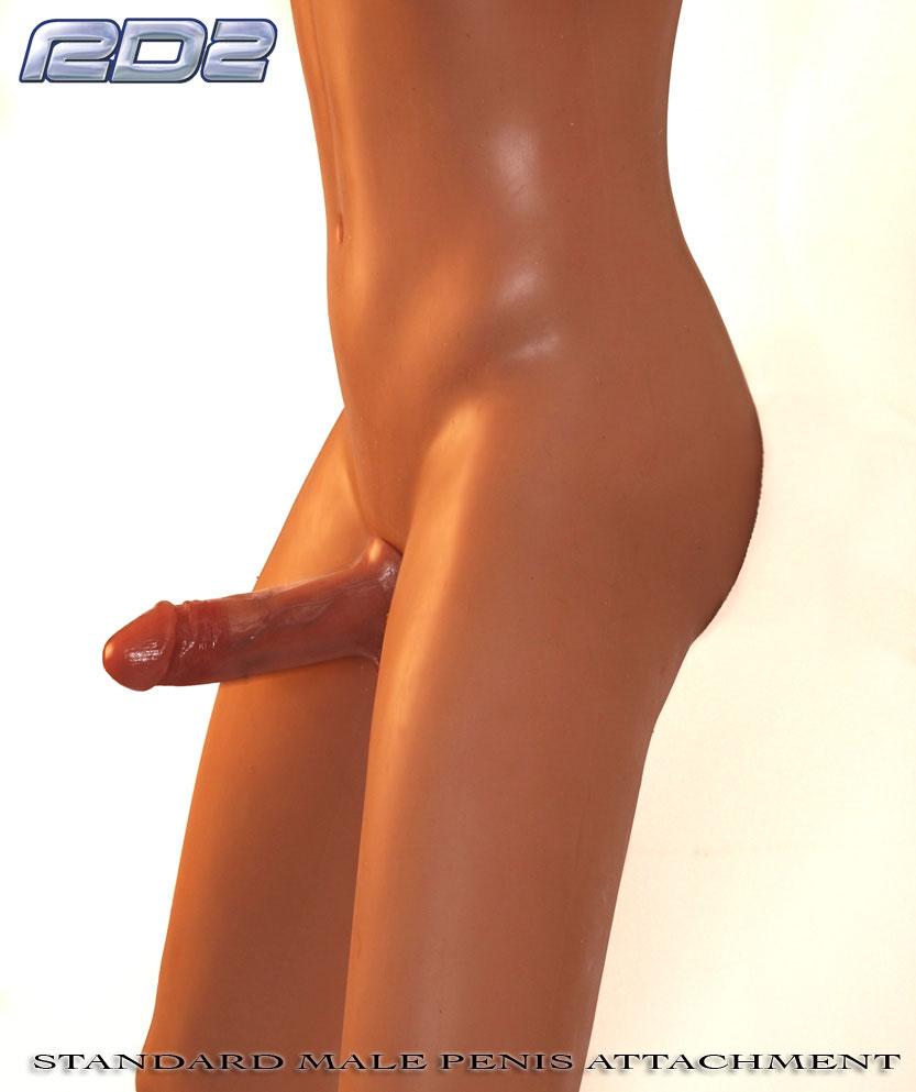 male_realdoll2_standard_penis2-1362032432