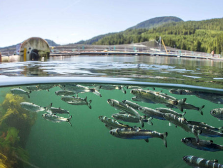 Something's Fishy about Fish Farms