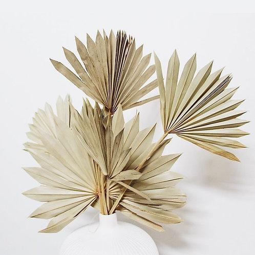 4pcs Natural Dried Palm Fan Leaves