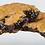 Thumbnail: Peanut Butter - Brownie Stuffed Cookie Dough