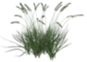 Tall-Grass-8-Large.png