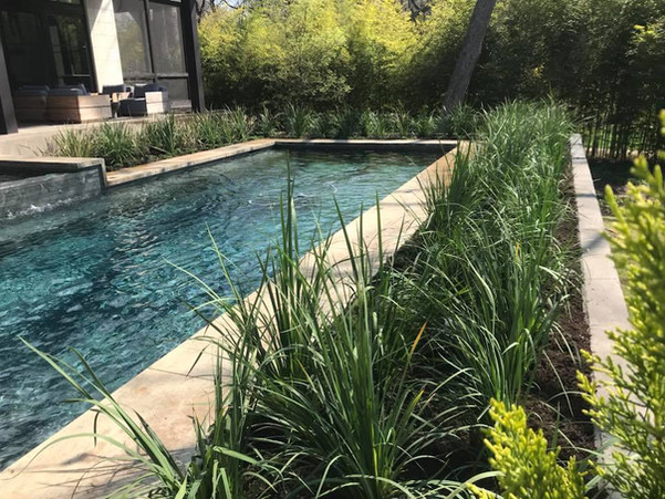 Landscape Rejuvenation in the Bluffview area of Dallas.