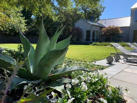 Dallas Gardening