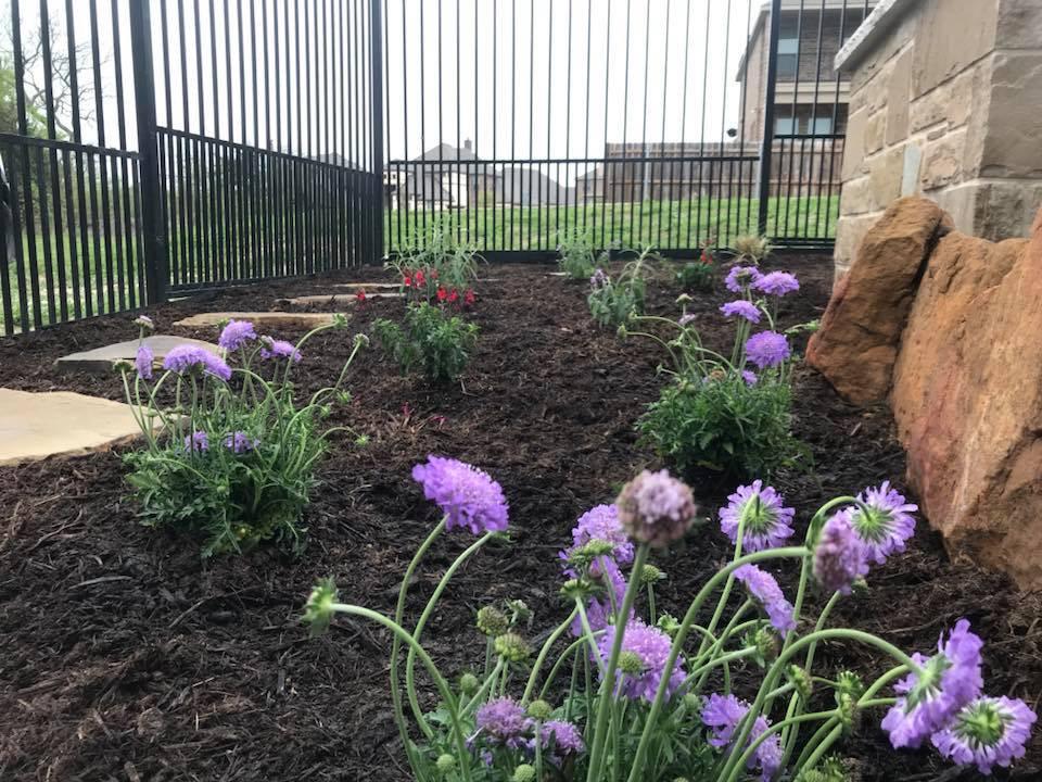 Backyard Landscape Addition