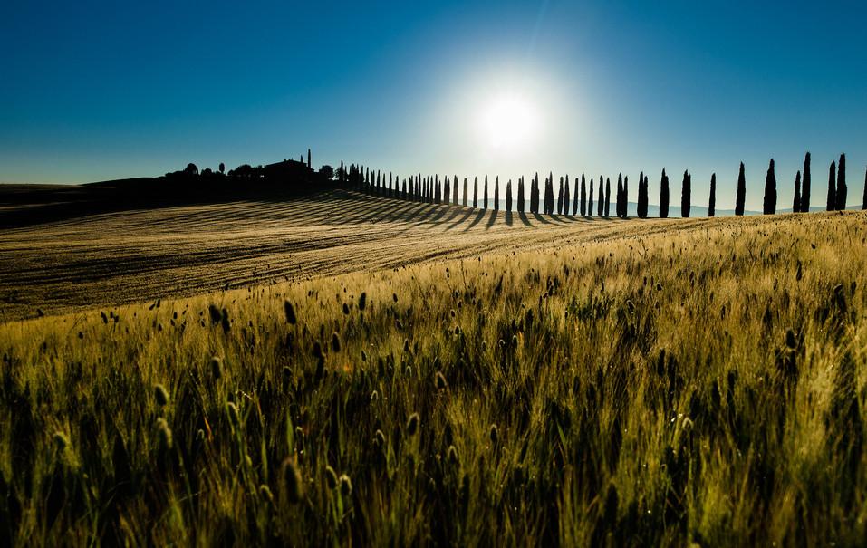 Tuscan Morning