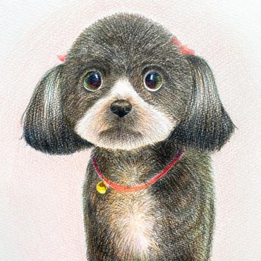 愛犬 色鉛筆画 中学2年生。