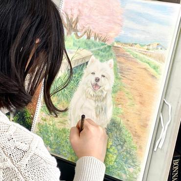 愛犬 色鉛筆画 初めての色鉛筆画。