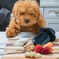 Diggs groov training aid fruit met hond.