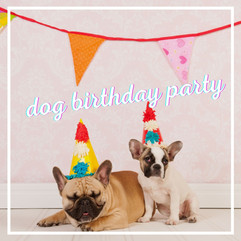 What you want to know about a dog birthday party