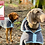 Thumbnail: Henry Wag Dog Drying Coat