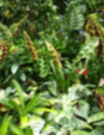 botanicalgarden_love_chihirooppata.JPG