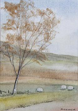 14 Grazing Sheep