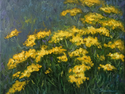 Tansy Flowers