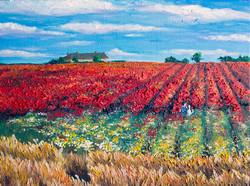 Dream of Poppies