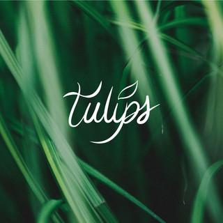 TULIPS | Logo & Brand Design