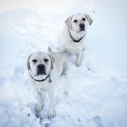 PK's Sadie and Luna of Nantcket