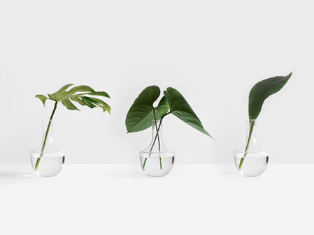 A beginners guide to some user friendly houseplants