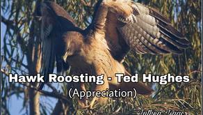 Ted Hughes – Hawk Roosting (Appreciation)
