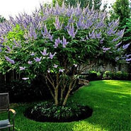 ornamental pruning, bush, tree, shrub, lanscape, landscaping