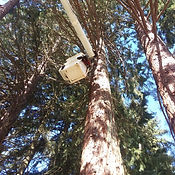 trimming, sunlight clearance, bucket truck trimming,