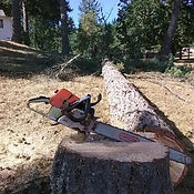 chainsaw, stihl, fell, felling, fir, logging, tree pro, eugene, springfield, lane county
