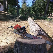 chainsaw, stihl, fell, felling, fir, logging, tree pro, eugene, springfield, lane county