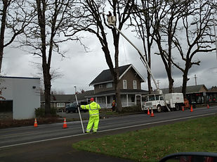 tree removal with flagging in cottage grove oregon, bucket truck