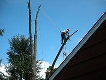 Dangerus Removal of tree over house, tree trimming, climbing, brush, limbing, tree removal, hazardous removal