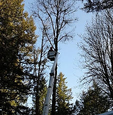 bucket truck, pruning, shaping. trimming trees, lift, areal lift