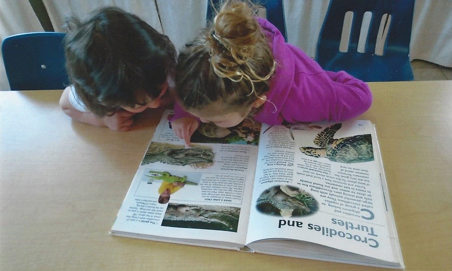 Reading about crocodiles and turtles
